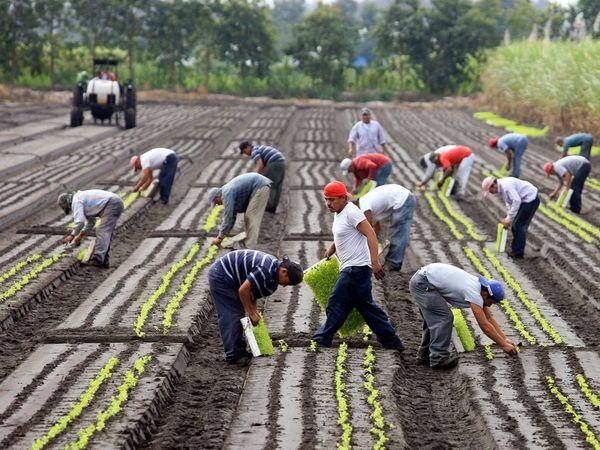 farm-workers_6394_600x450