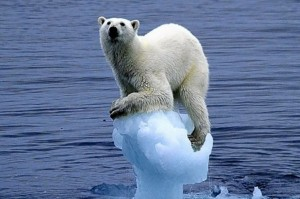 polar-bear-on-ice
