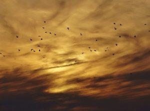 birds and chemtrail sky