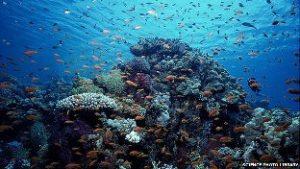 ocean-health