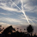 chemtrails and palm trees