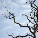 dead tree braches