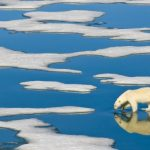 arctic-ice-melting-faster-and-earlier