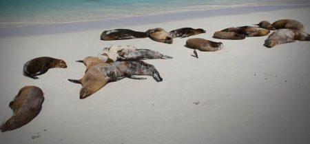 dead-sea-lions-california-2yroebigz8gapac6g799my