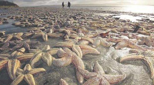 massive highly toxic algae bloom fuels total marine