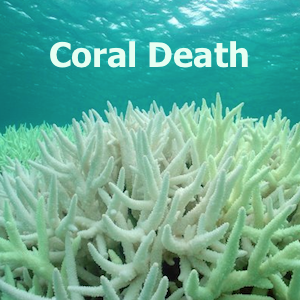 """""""Nearly Half Of The Great Barrier Reef To Die In The Next Month"""", Abrupt Climate Shift Is Now"""
