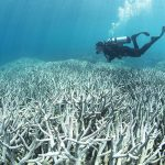 great-barrier-reef-damage-global-warming